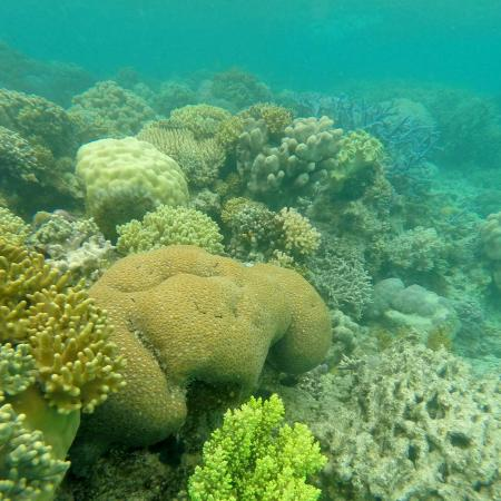Corals on Lizard Island