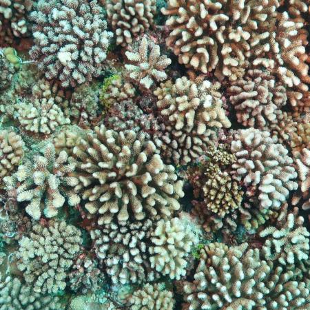 Aerial shot of coral reef.